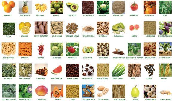 prebiotics ingredients